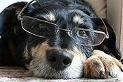 Музей предлагает программу для собак и их хозяев. // online812.ru