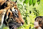 Посетителей от тигров отделяет стекло. // zsl.org