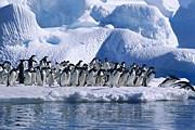 Антарктика принимает все больше туристов. // nav96.ru