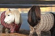 Пони рекламируют отдых в Шотландии. // visitscotland.com