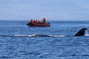 Суда подплывают к китам максимально близко. // iStockphoto