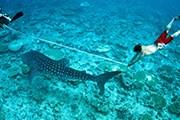 Фестиваль проведут ученые, изучающие акул. // Conrad Maldives Rangali Island