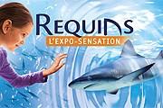 Все об акулах можно узнать на выставке в Монако. // oceano.mc
