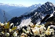 Летом курорт предлагает полюбоваться горными пейзажами. // rosaski.com