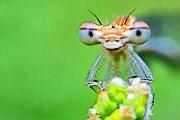 В Монако проходит выставка насекомых. // oformi.net
