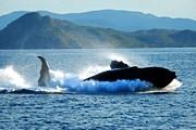Туристы смогут понаблюдать за китами. // australiakash.blogspot.com