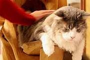 Кошачьи бары и кафе пользуются популярностью во всем мире. // lecafedeschats.fr