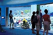 Акулы будут обитать в аквариуме объемом почти в миллион литров. // travelandleisure.com