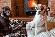 Каждая собака получает свой акварельный портрет. // guardian.co.uk