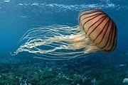 Многие купальщики страдают от медуз. // aif.ru