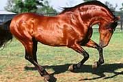 8 сентября состоится Праздник лошади. // gsmnet.ru