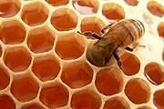 Фестиваль мёда в Нью-Йорке пройдет в третий раз. // foodmatters.tv
