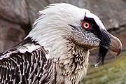 В зоопарке содержится 150 видов животных и птиц. // korkeasaari.fi