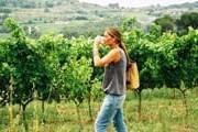 Туристы посетят виноградники. // quelujo.es