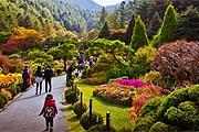 Цветение хризантем в дендрарии Ачхим-Коё // visitkorea.or.kr