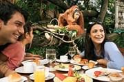Завтрак в тропическом лесу сингапурского зоопарка // zoo.com.sg