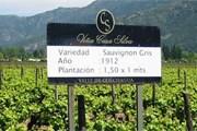 Туристы посетят винные плантации. // experienceplus.com