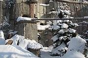 Московский зоопарк зимой // moscowzoo.ru