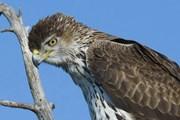 В Малаге можно увидеть уникальных птиц. // malagabirding.com