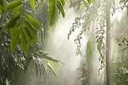 Выставка напоминает настоящий тропический лес. // nybg.com