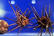 В музее можно увидеть множество обитателей Средиземного моря. // hurriyetdailynews.com