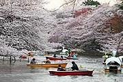 Парк Инокасира - один из красивейших в Токио. // Alamy