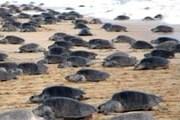 Пляжный отдых можно совмещать с экологическими экскурсиями. // quadratin.com