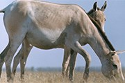 Туристы увидят животных в их естественной среде обитания. // ТАСС / Г.Шевакин