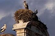 В Алькала-де-Энаресе обитают сотни аистов. // pixelbirds.co.uk