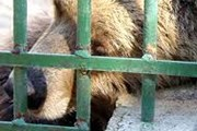 Животные содержатся в недопустимых условиях. // zivotinja.hr