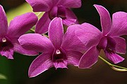 В Андалусии - выставка орхидей. // Travel.ru