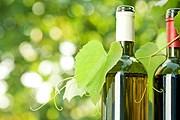 Моравские виноделы представят свою продукцию. // iStockphoto / Yaruta