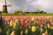 Туристам нравится Голландия. // paxarcana.wordpress.com