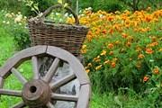 Туристам нравится отдых в сельских усадьбах. // tourismtoyou.ru
