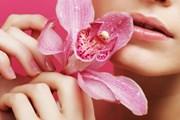 Панама ждет любителей экзотических цветов.  // Juice Team, Shutterstock.com