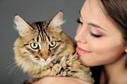 В кафе можно пообщаться с кошками.  // Africa Studio, Shutterstock.com