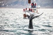 Кроме того, туристы смогут понаблюдать за китами.
