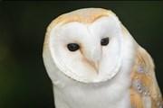 Посетители бара смогут пообщаться с совами.