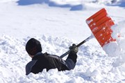 Снега слишком много.  // Trudy Wilkerson, Shutterstock.com
