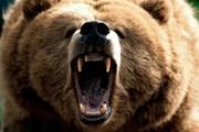 Пение предупредит медведя о появлении людей. // mchs.gov.ru