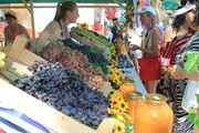 Лучший виноград Тамани - на винном фестивале. // temryuk.ru
