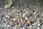 Таможенники Сардинии конфискуют сотни килограммов ракушек и песка. // facebook.com/pages/Sardegna-Rubata-e-Depredata