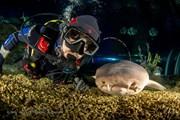 Общение с акулами проходит под присмотром опытного дрессировщика. // Pavel Osada, oceanspirit.ru