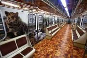 Тигро-леопардовый поезд метро // dt.mos.ru