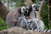 Гости отеля в зоопарке смогут вплотную пообщаться с животными. // SWNS.com