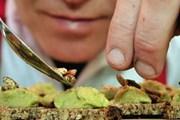 Эндрю Холкрофт готовит канапе с насекомыми. // grubkitchen.co.uk