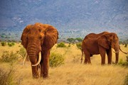 """В Кении можно увидеть """"большую африканскую пятерку"""" животных. // Управление по туризму Кении"""