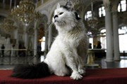 Коты охраняют Эрмитаж от грызунов. // telegraph.co.uk