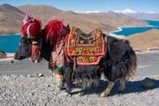 Авторский путеводитель поможет спланировать незабываемое путешествие в Тибет. // jum ruji, shutterstock.com