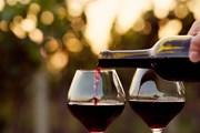 Лучшие винодельни региона объединены одним маршрутом. // Rostislav_Sedlacek, shutterstock.com